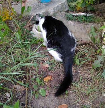 Oglądasz obrazki z tematu: Biało czarna koteczka błąka się w Fastach.