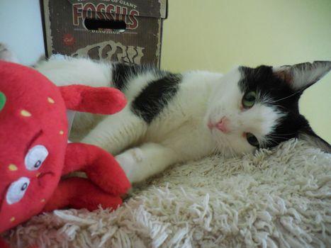 Oglądasz obrazki z tematu: Biało czarna kotka znaleziona w Fastach