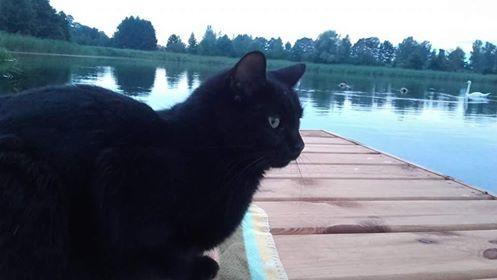 Oglądasz obrazki z tematu: Czarny kot z ul Hetmanskiej odnaleziony