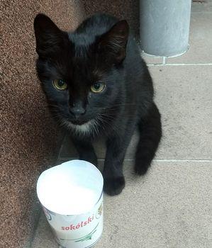 Oglądasz obrazki z tematu: Czarna kotka błaka się przy Kozłowej