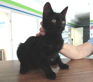 Oglądasz obrazki z tematu: Czarna kotka znaleziona na Pułaskiego