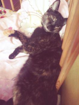 Oglądasz obrazki z tematu: Czarna kotka z rudą skarpetką zaginęła w ok. Dziesięcin