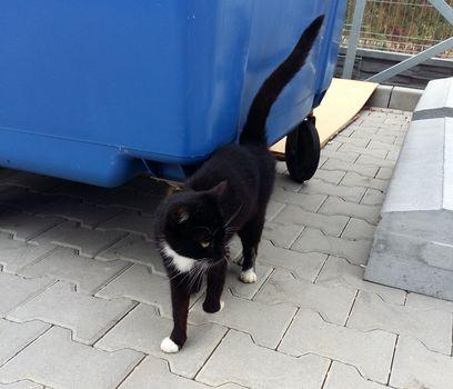 Oglądasz obrazki z tematu: Czarno biały kotek błąka się po Sowlanach (ok. Alejkowej i Przemysłowej)