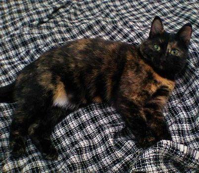 Oglądasz obrazki z tematu: Czarno ruda kotka zaginęła w Starosielcach