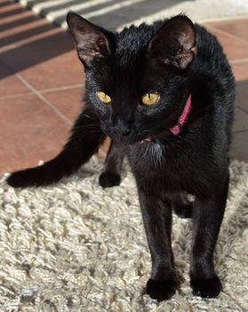Oglądasz obrazki z tematu: Czarny kot błąka się w Starosielcach