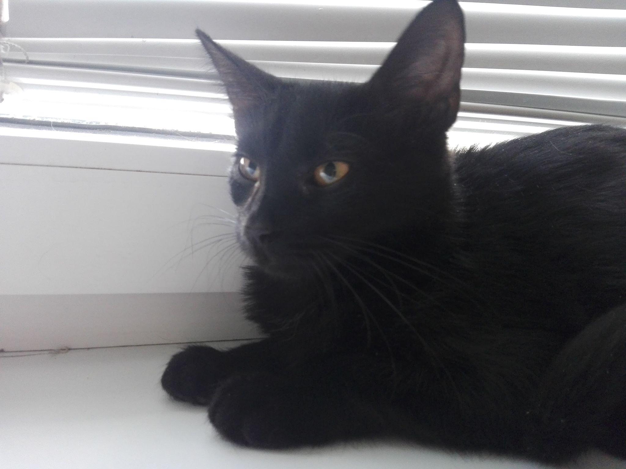 Oglądasz obrazki z tematu: Czarny kociak znaleziony na ul. Warszawskiej