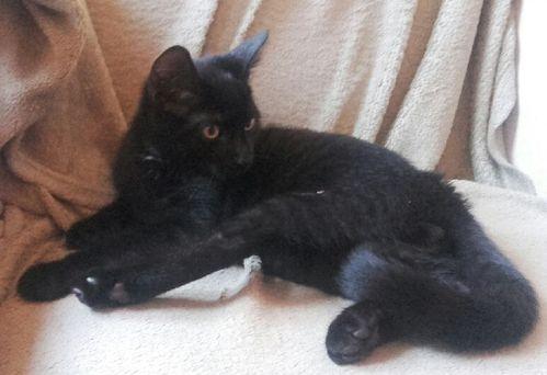 Oglądasz obrazki z tematu: Czarny kociak znaleziony na Antoniuku Fabrycznym