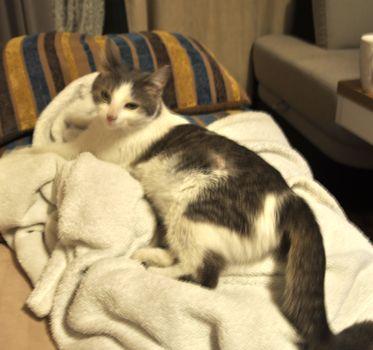 Oglądasz obrazki z tematu: Srebrna koteczka znaleziona na ul. Antoniukowskiej