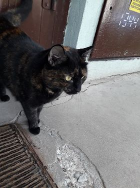 Oglądasz obrazki z tematu: Czarno ruda kotka błąka się przy ul. Popiełuszki