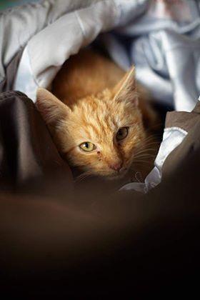 Oglądasz obrazki z tematu: Rudy kotuś znaleziony na Chłopskiej