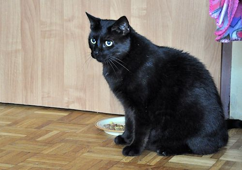 Oglądasz obrazki z tematu: Czarny duży kot zaginał na Ciepłej
