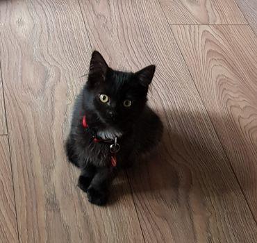 Oglądasz obrazki z tematu: Czarny kotek z Dojlid odnaleziony