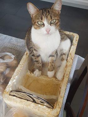 Oglądasz obrazki z tematu: Kot czarny i szaro biały zaginęły w Kleosinie