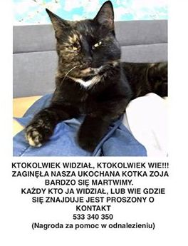 Oglądasz obrazki z tematu:  Kotka szylkretka zaginęła na ul. Orzeszkowej w Białymstoku