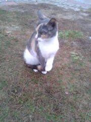 Oglądasz obrazki z tematu: Niebiesko rudo biala koteczka błąka się po Produkcyjnej.