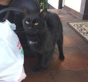 Oglądasz obrazki z tematu: Czarny kot znaleziony na os Skorupy
