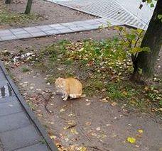Oglądasz obrazki z tematu:  Na ulicy Tuwima błąka się  rudy kot