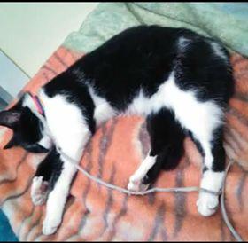 Oglądasz obrazki z tematu: Czarno biała kotka zaginęła na ul. Żurawiej