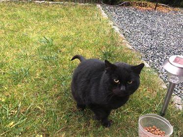 Oglądasz obrazki z tematu: Czarny kot  przybłąkał się na ul. Puchalskiego, os. Bagnówka