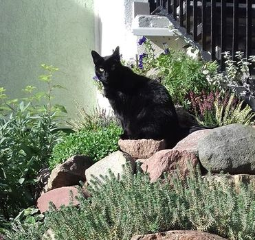 Oglądasz obrazki z tematu: Czarna kotka z ul. Duboisa wróciła do domu