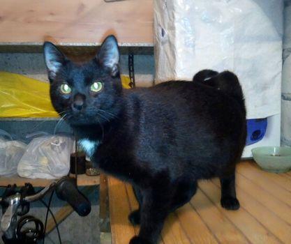 Oglądasz obrazki z tematu: Czarny kotek błaka się po Warszawskiej