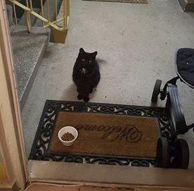 Oglądasz obrazki z tematu: Na os Bema  przybłąkał się czarny kot.