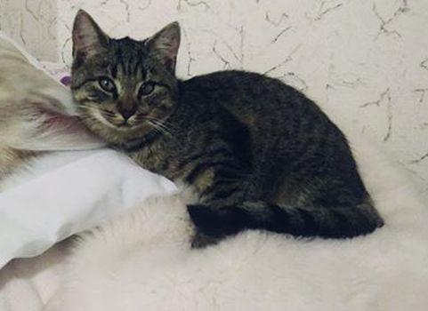 Oglądasz obrazki z tematu: Szara pręgowana kotka zaginęła na Dojlidach