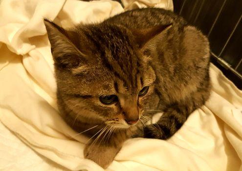 Oglądasz obrazki z tematu: Szary kotek/kotka znaleziony na Lipowej