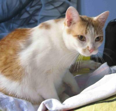 Oglądasz obrazki z tematu: Bialo rudy kot zaginął na Słonecznikowej