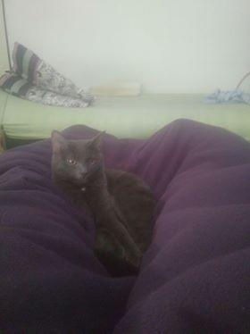 Oglądasz obrazki z tematu: Niebieska kotka zaginęła na ul. Żeromskiego