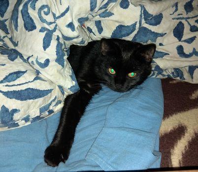 Oglądasz obrazki z tematu: Czarna kotka z os. Bażantarnia odnaleziona