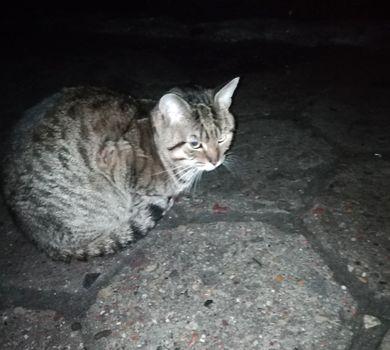 Oglądasz obrazki z tematu: Szary kotek błąka się po ul. Nowogródzkiej.