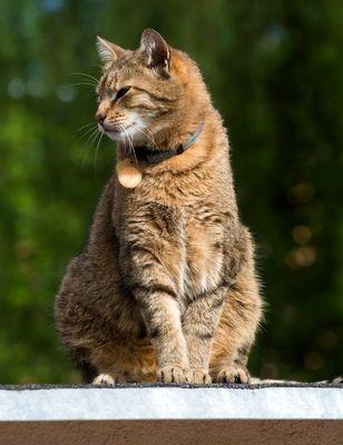 Oglądasz obrazki z tematu: Szary duży kocur z ul Żabiej odnaleziony:)