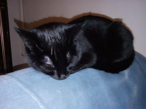 Oglądasz obrazki z tematu: Czarna kotka z Jagiellońskiej odnaleziona