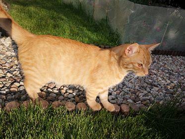 Oglądasz obrazki z tematu: Rudy kot zaginał w Jurowcach