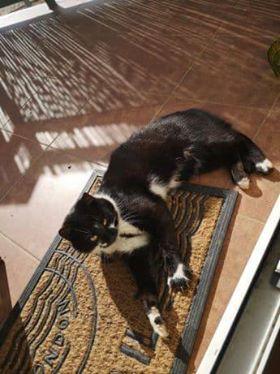 Oglądasz obrazki z tematu: Czarno biały kot błąka się  po ul. Trawiastej
