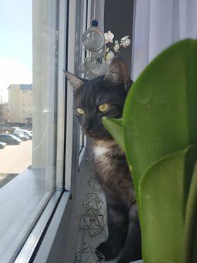 Oglądasz obrazki z tematu: Dima pozdrawiam p. Anię :)