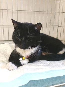 Oglądasz obrazki z tematu: Czarno biały kot w tęczowej obroży znaleziony na Nowym mieście