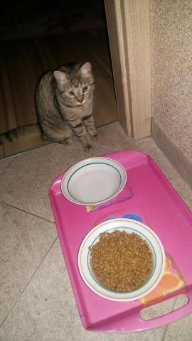 Oglądasz obrazki z tematu: Szary kotek/kotka  błąka się po Sowlańskiej