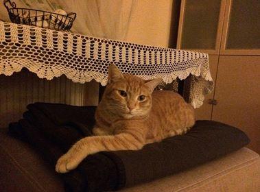 Oglądasz obrazki z tematu: Rudy kot zaginął na Baranowickiej