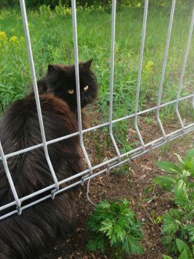 Oglądasz obrazki z tematu: Czarny puchaty kot błąka się po ul. Boboli