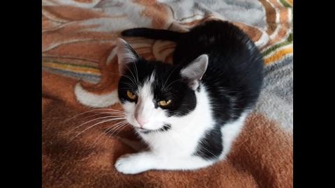 Oglądasz obrazki z tematu: Czarno biała kotka z ul. Kosmicznej odnaleziona
