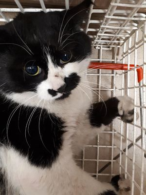 Oglądasz obrazki z tematu: CZarno - biały kot znaleziony na Pogodnej