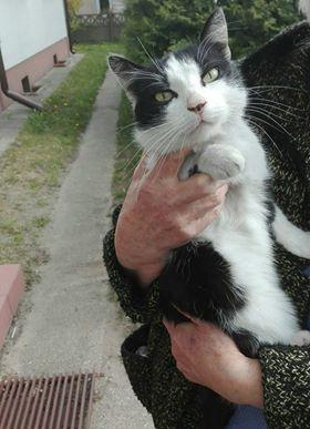 Oglądasz obrazki z tematu: Biało czarna kotka błąka się po ul. Żurawiej
