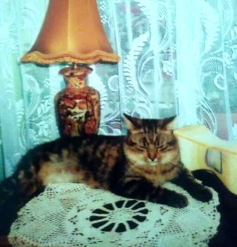 Oglądasz obrazki z tematu: Szary puchaty kot zaginałw Bielsku
