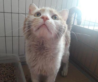 Oglądasz obrazki z tematu: Biało rudy kot znaleziony na ul. Broniewskiego