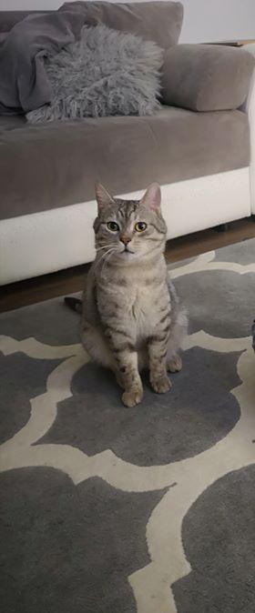 Oglądasz obrazki z tematu: Srebrny kot z  Doliny Cisów odnaleziony