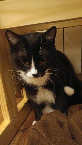 Oglądasz obrazki z tematu: Czarno biały kot zaginął w okol. Juchnowca Kościelnego