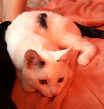Oglądasz obrazki z tematu: Biało czarny kotek z  ul. Klepackiej odnaleziony