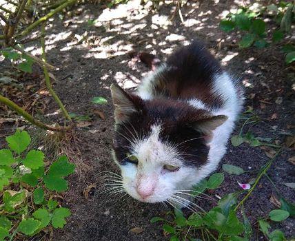 Oglądasz obrazki z tematu: Czarno biały kot znaleziony na Nowym Mieście